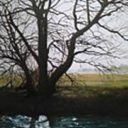 Trent Side Tree. Art Print