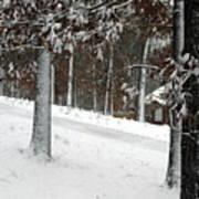 Tress Of Snow Art Print