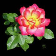 Tri-color Pink Rose2 Cutout Art Print