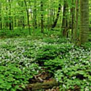 Trillium Woods Vi Art Print