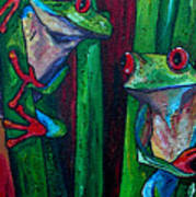 Trinity Of Tree Frogs Art Print