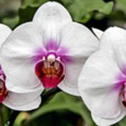 Trio Of Beautiful Flowers Art Print