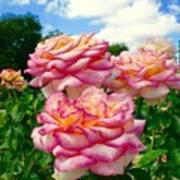 Trio Of Rose Art Print