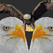 Triple Eagle Art Print