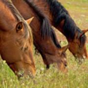 Triple Mustang Treat Art Print