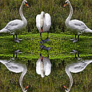 Triplets In Reflection Art Print
