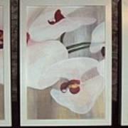 Triptic White Orchids On Light Background Art Print