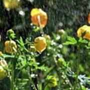 Trollius Europaeus Spring Flowers In The Rain Art Print