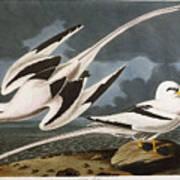 Tropic Bird Art Print