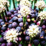 Tropical Berries 3 Art Print