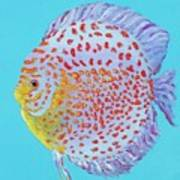 Tropical Discus Fish With Red Spots Art Print
