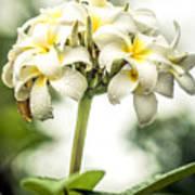 Tropical Flower 7 Art Print
