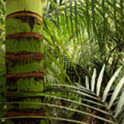 Tropical Forest Jungle Art Print