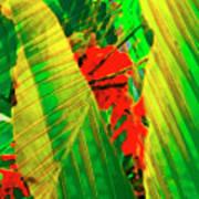 Tropical Fusion Art Print