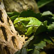 Tropical Green Frog Art Print