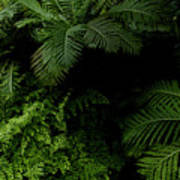 Tropical Jungle Art Print