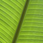 Tropical Leaf Detail Art Print