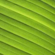 Tropical Leaf Patterns Art Print