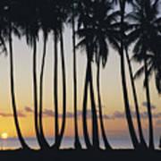 Tropical Palm Sunset Art Print