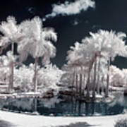 Tropical Paradise Infrared Art Print