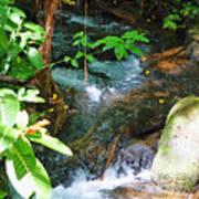 Tropical Stream Art Print