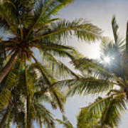 Tropical Sun Art Print