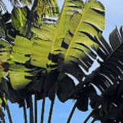 Tropical Sunlight And Shadow Art Print