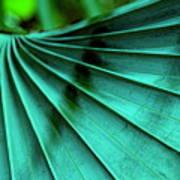Tropical Wings Art Print