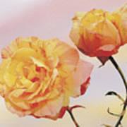 Tropicana Roses Art Print