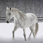 Trot In The Snow Art Print