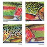 Trout Colors Art Print