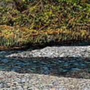 Trout Creek Art Print