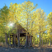 Truckee Shack Near Sunset During Early Autumn With Yellow And Green Leaves On The Trees Art Print