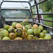 Truckload Of Coconuts Art Print