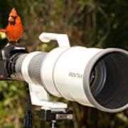 True Bird Photographer Art Print