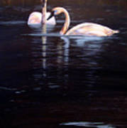 Trumpeter Swans Art Print