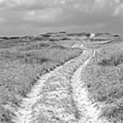 Truro Dune Trail Art Print