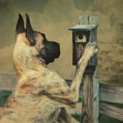 Tucker And The Birdhouse Art Print