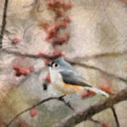 Tufted Titmouse 2 Art Print