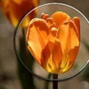 Tulip 1b Art Print