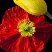 Tulip And Iceland Poppy Art Print by Garry Gay