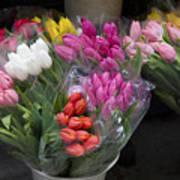 Tulip Bouquets Art Print