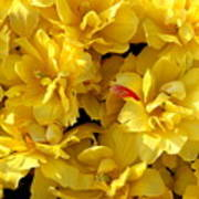 Tulip Bunching Art Print