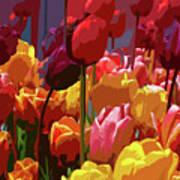 Tulip Confusion Art Print