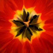 Tulip Explosion Kaleidoscope Art Print