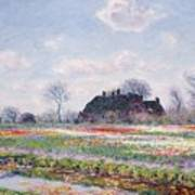 Tulip Fields At Sassenheim Art Print