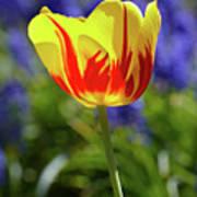 Tulip Flame Art Print