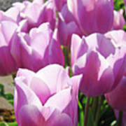 Tulip Garden Flowers Purple Lavender Pastel Art Baslee Troutman Art Print