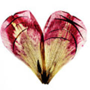 Tulip Heart Art Print