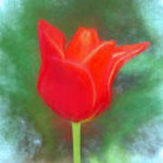 Tulip In Abstract. Art Print